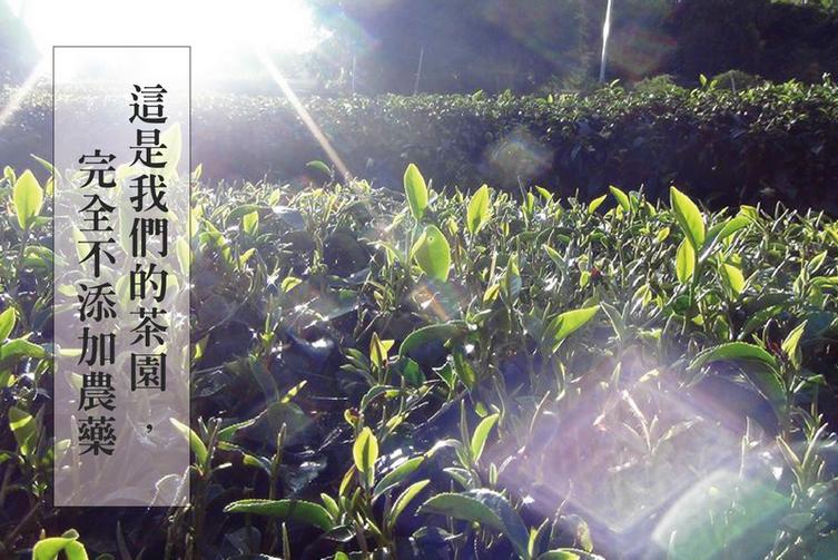 東泰:茶樹